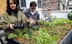 In Mexico City, a green revolution, one lettuce at a time | Sustainable imagination | Scoop.it