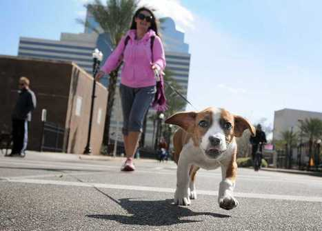 Jacksonville Humane Society collects $100000 from Mutt March event | Jacksonville Florida | Scoop.it