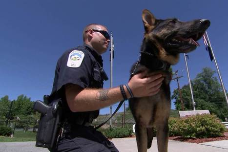 This Program Turns Stray Dogs Into Police K-9 Superstars | Kickin' Kickers | Scoop.it