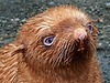 Australia: Happy ending for little seal no-one wanted to play with | Wicked! | Scoop.it
