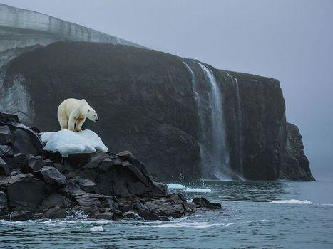 #ours blanc – Franz Josef Land Photo -- National Geographic Photo of the Day | Hurtigruten Arctique Antarctique | Scoop.it