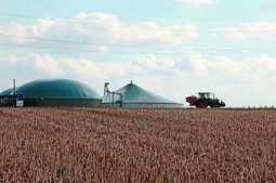 Farmland Suddenly Attractive to Investors | Timberland Investment | Scoop.it
