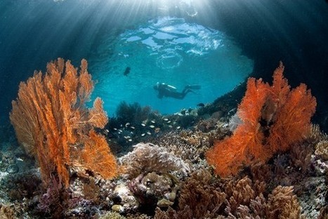 Diving Into Raja Ampat's Underwater Rainbow - Wall Street Journal | ScubaDiving | Scoop.it