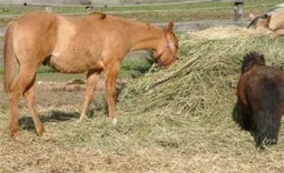 Feeding your horse the natural way - Equine Wellness Magazine | all things horsey | Scoop.it