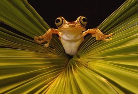 Top 30 National Geographic Frog Pictures Of All Time - | Biology | Scoop.it