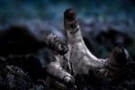 Zombie themed restaurant based on resident evil | Strange days indeed... | Scoop.it