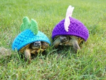 Turtle Outfits | Kitsch | Scoop.it