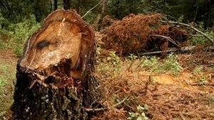 Una plaga amenaza Durango, primer lugar en producción forestal ... | Bichos en Clase | Scoop.it