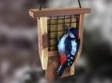 Les oiseaux | nos animaux | Scoop.it