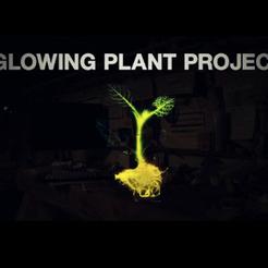 Planta que brilha no escuro pode ser solução para iluminação sustentável   Sustain Our Earth   Scoop.it