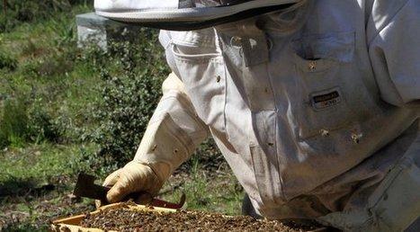 Miel de Corse : toujours plus demandé et toujours plus rare | Filière apicole française | Scoop.it
