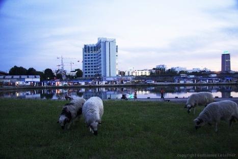 « Broute Saint-Denis » : des moutons dans la banlieue | Solutions pour un monde plus collaboratif, participatif, coopératif ! | Scoop.it