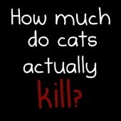 How much do cats actually kill? [Infographic] - The Oatmeal | Cats' behavior and maintenance. | Scoop.it