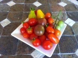 Tomatoes …Seriously!   100 Acre Wood   Scoop.it