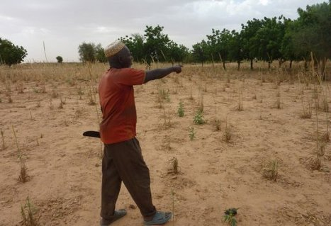 CAMPAGNE AGRICOLE NIGER 2013 : Un déficit céréalier de 343.566 tonnes enregistré | SécuriteAlimentaireSahel | Scoop.it