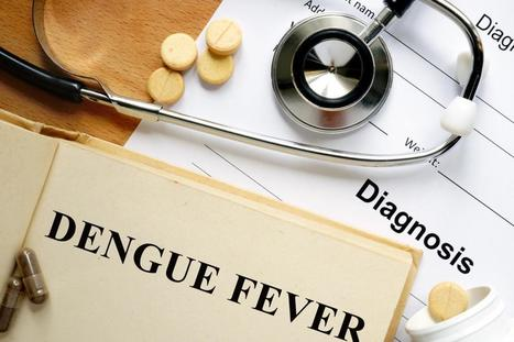 Potentially Deadly Dengue Virus Hits Hawaii   Virology News   Scoop.it