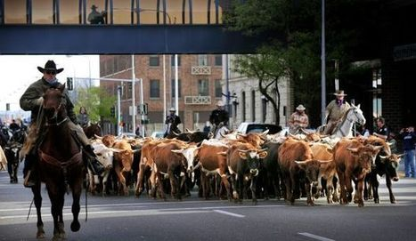 Annual cattle drive and parade highlight 'western tradition' in Billings - Billings Gazette   Community Culture and Customs   Scoop.it