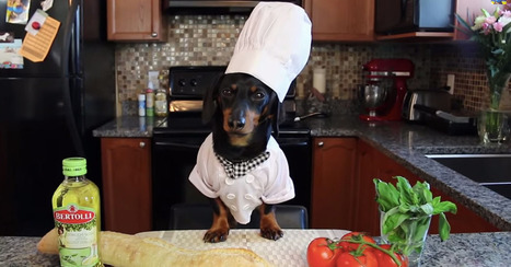 A dog dressed as a tiny chef makes grilled bruschetta [VIDEO] | Dog Lovers | Scoop.it