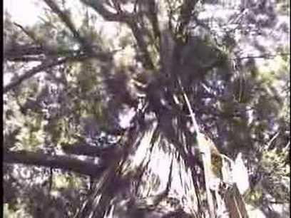 Climbing the World's Tallest Tree @digitalnapoleon | Investors Europe, Gibraltar | Scoop.it