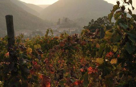 #MadeinMarche Wine: Tenuta Colli di Serrapetrona | Wines and People | Scoop.it