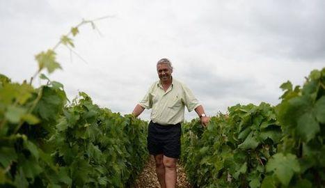 Intempéries : des vins AOP/AOC veulent déroger à leurs obligations - L'express | Agriculture en Dordogne | Scoop.it