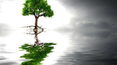 :: Sustentabilidade Digital :: | Social Mercor | Scoop.it