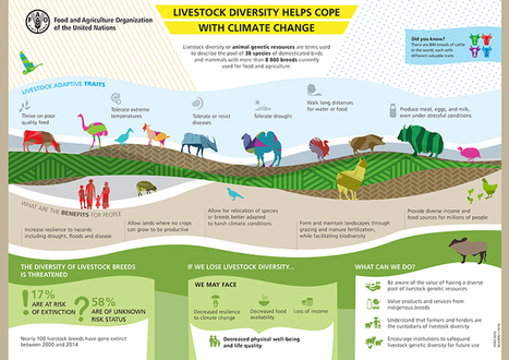 Livestock diversity helps cope with climate change | Animal Nutrition Spotlight | Scoop.it