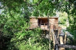 Rent treehouses for your next holiday | Tour Plan To India | Scoop.it