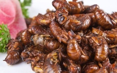 Insects could be superfood – but don't picture them   Entomophagy: Edible Insects and the Future of Food   Scoop.it