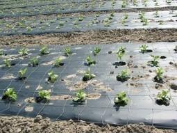 Un plastique biodégradable adapté à l'agriculture | Repenser le progrès : pour une économie circulaire | Scoop.it