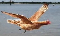 Chickens Flying North for the Spring?   Smith Meadows   Sustainable Farming   Scoop.it