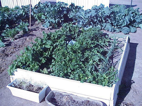 Arizona Gardeners: Fall vegetables, flowers, and other tasks | CALS in the News | Scoop.it