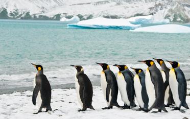 5 Models of Behaviour for Great Leadership   EFL Teaching Journal   Scoop.it