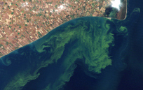 Report Predicts Ever-Bigger Lake Erie Algae Blooms | TIME.com | Sustain Our Earth | Scoop.it