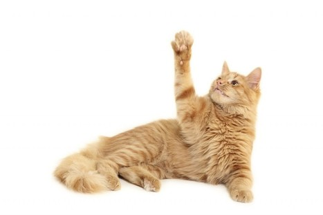 Dogs we understand. Cats are mysterious, even though they are the most popular pet | Veterinary News | Scoop.it