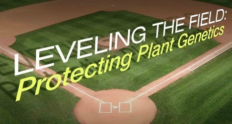 Breeding and Baseball | Horticulture | Scoop.it