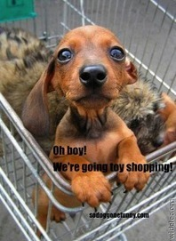 So Dog Gone Funny!: 30283 Yay, we're going shopping | Dog Love | Scoop.it