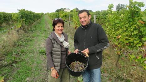 La vie de château à Monbazillac : ces liquoreux fêtent les 80 ans de leur appellation ! | Agriculture en Dordogne | Scoop.it