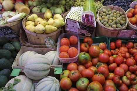 La dieta contra el cáncer   Ciència al CFA Palau de Mar   Scoop.it
