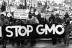 Genetically Modified Crops Feed the World? Debunking the Myth | Food issues | Scoop.it