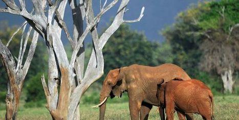 La moitié des espèces animales vertébrées a disparu en quarante ans | Planete DDurable | Scoop.it