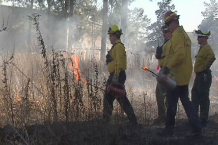 Nacogdoches, Forest Service firefighters use prescribed burns for training - KTRE | Forestry-Aspect 1 | Scoop.it