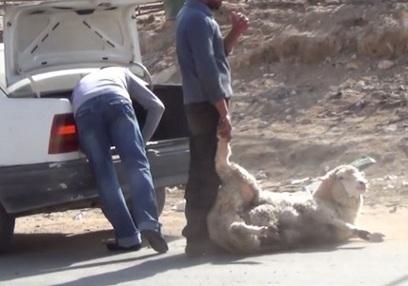 Cruelty continues in Jordan | Nature Animals humankind | Scoop.it