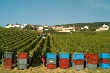 Champagne growing season 'worst in decades' | Daily wine news - the latest breaking wine news from around the world | News | decanter.com | Food, wine and other pleasures | Scoop.it