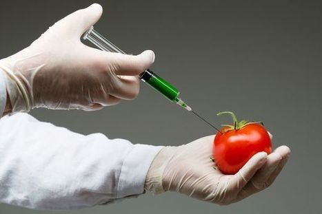 JIC quote: A supercharged GM tomato a day could keep the doctor at bay | BIOSCIENCE NEWS | Scoop.it