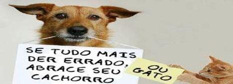 Patas e Pets: Castração Canina | VANTAGENS DA CASTRAÇÃO | Scoop.it