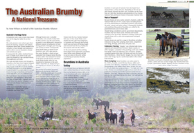 The Australian Brumby, a National Treasure | Introduce new course in schools called COMPASSION | Scoop.it