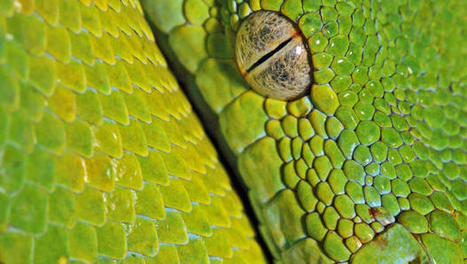 How To Know If You're Working With Mammals Or Reptiles (And Why It Matters To Your Creativity) | Inspiring Ideas, Innovators | Scoop.it