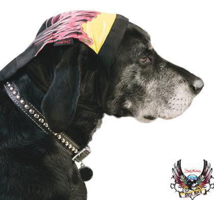 Photos: Bret Michaels launches a line of pet products | It's Show Prep for Radio | Scoop.it