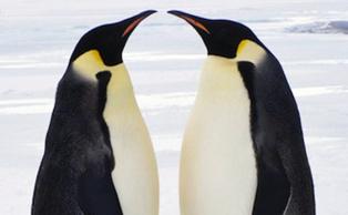 A Very Mild Case of Google Penguin? | SEO Professional | Scoop.it